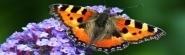 butterfly_Bild_von_der-bilderknipser_auf_pixabay